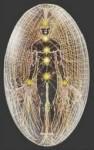 Human-aura